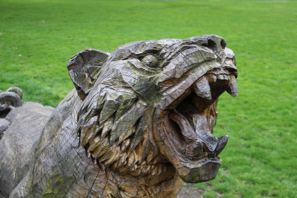 Wild_Tiger_in_Victoria_Park_St_Helens.jpg
